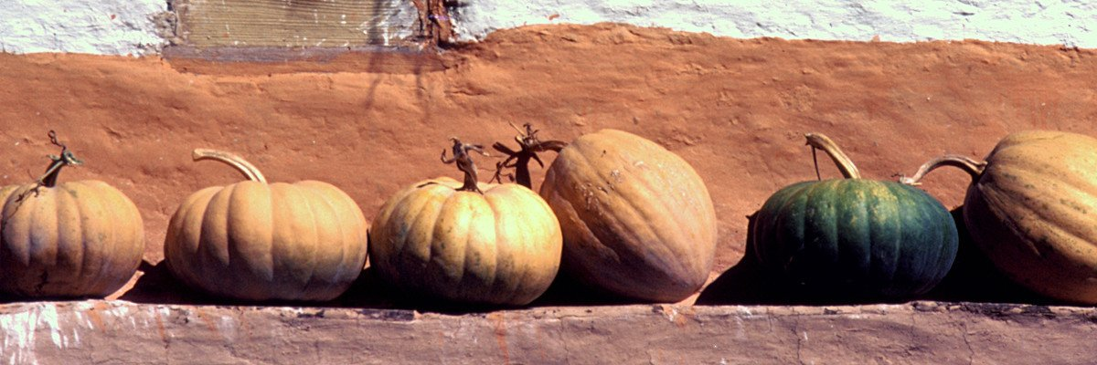 Row of orange pumpkins with one green one