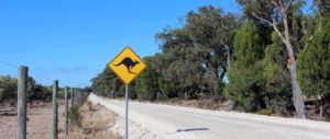 Kangaroo sign on dirt road