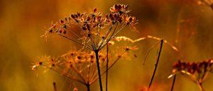 Autumn Seed Heads