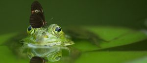 Butterfly sitting on a frog
